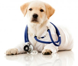 Veterinarian in Energy, IL